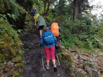 4d) v džungli často prší