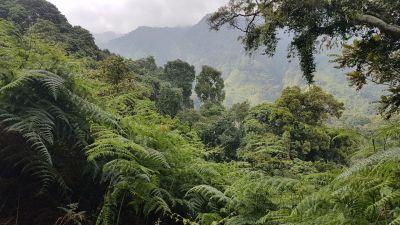 1 pásmo horského lesa