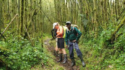 34 pásmo babusového lesa