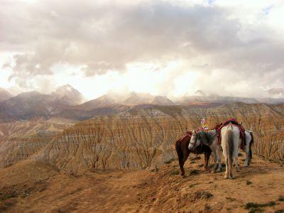 7d Naše čekající koně