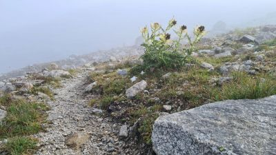 2b- alpská flóra